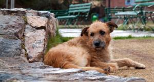 Centro de RSJ - El País de los Jóvenes - Rescatando a un perro callejero