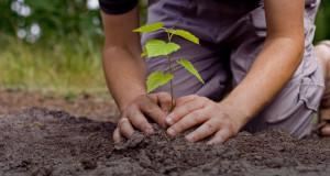 Centro de RSJ - El País de los Jóvenes - Plantar árboles