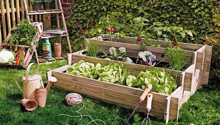 5 pasos sencillos para hacer un huerto t mismo for Hacer un huerto en el jardin