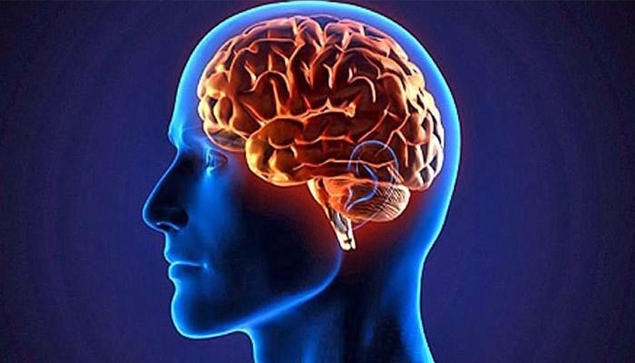 Resultado de imagem para cerebro 700 x 400