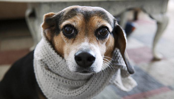 6 recomendaciones para proteger a tu perro de la época de frío