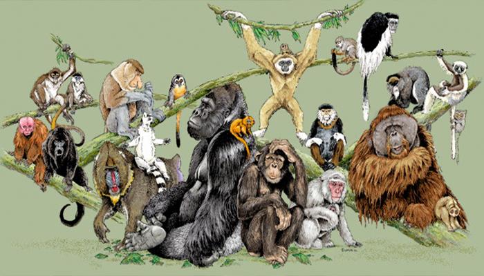 Estudio revela que para el 2030 se extinguirá el 75% de las especies de monos