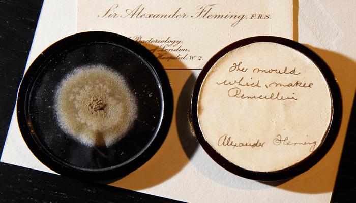 Subastan el moho que se usó para crear la Penicilina