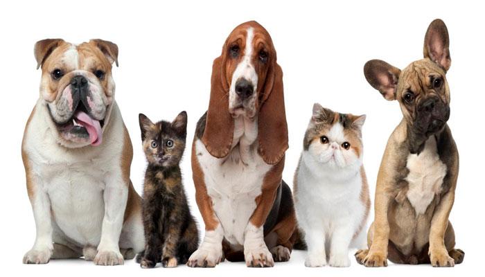 Aprueban ley de bienestar animal en guatemala for Red transparente para gatos