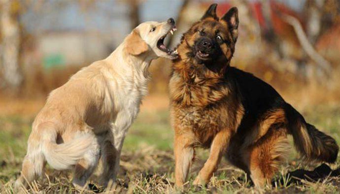 ¿Cómo detener una pelea entre perros?