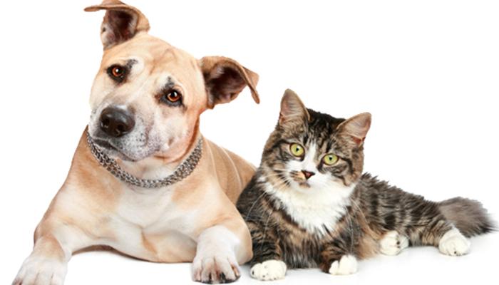 ¿Quienes son mejor mascota, los perros o los gatos?