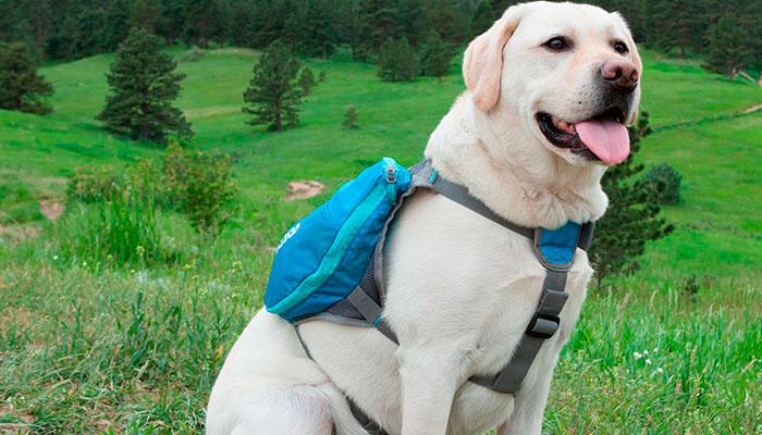 perro-mochila