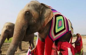 Elefantes de India son protegidos con suéteres tejidos
