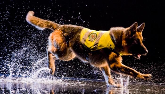 """Nat Geo Wild estrena producción original: """"Misión Canina"""""""