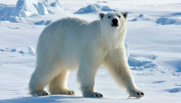 Fotos: Oso Polar recibe a turistas al ritmo de la