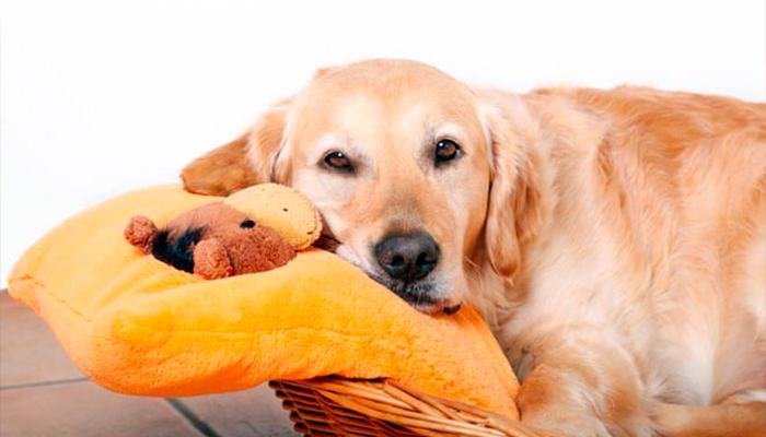 ¿Qué cuidados debe tener una perra embarazada?