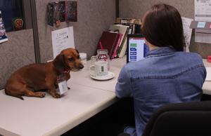 Museo Miraflores se une al Día de llevar a tu Perro al Trabajo