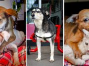 Fundación Fichulais necesita tu apoyo para seguir rescatando animalitos