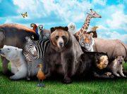 TEST: ¿Cuánto sabes sobre animales?