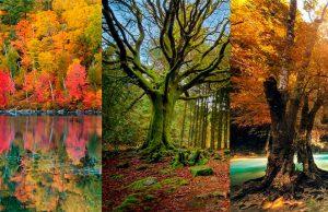 7 bosques más bellos del mundo según National Geographic