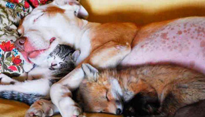 Lanzan colección de muebles dedicada a mascotas