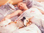¿Qué efectos tiene el dormir con nuestros perros?