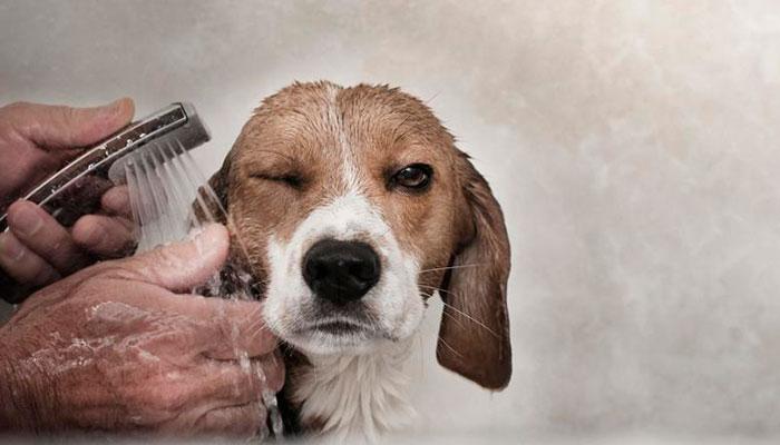 5 mitos sobre el baño de los perros