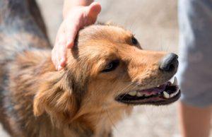 Guatemala lanza Unidad de Protección y Bienestar Animal