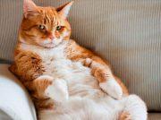 ¿Por qué mi gato araña el sofá?