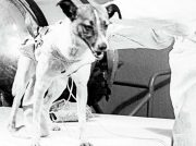 Conoce la historia de Laika, la perrita que hace 60 años orbitó la Tierra