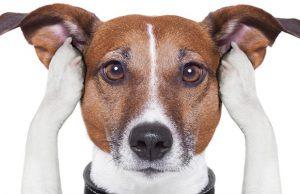 7 consejos para cuidar a tu mascota durante la pirotecnia de estas fiestas