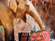 Celebra la navidad de los animales del Zoológico La Aurora