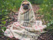 ¿Cómo cuidar a tus mascotas en la época de frío?