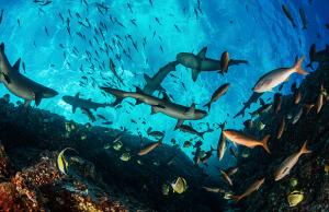 """National Geographic estrena """"Semana de Exploradores"""""""