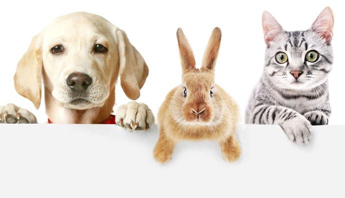 Recomendaciones para las mascotas en esta Semana Santa