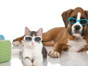 Recomendaciones para viajar con mascotas en esta Semana Santa
