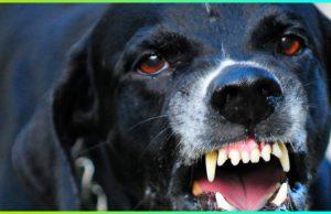 <b><center>Tu perro ¿es agresivo?</b></center>
