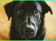 <b><mark>Darle hogar a un perro callejero</mark></b>