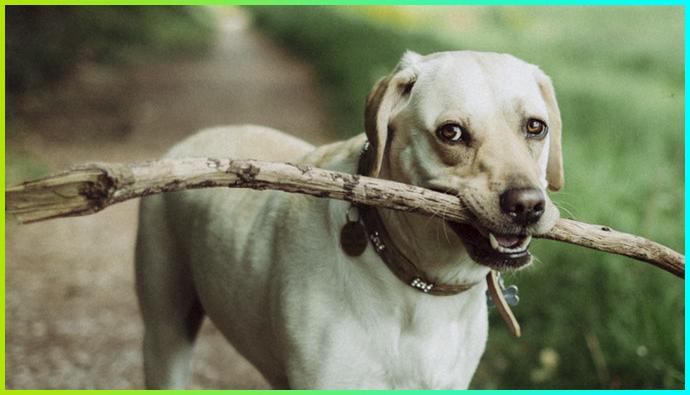 <CENTER><B>Tips para entrenar a tu cachorro</B></CENTER>