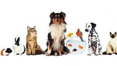 """Exposición de mascotas """"Pet Fest Guatemala"""""""
