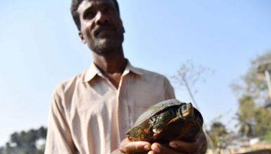 Templo hindú salva a tortugas de la extinción