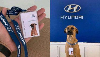 Hyundai adopta a perrito que dormía afuera de una de sus tiendas en Brasil