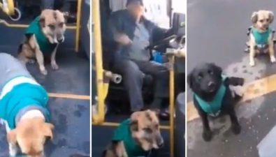 Conductores de buses en Chile adoptan a perros callejeros para que los acompañen