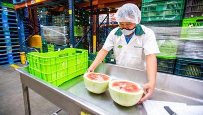 División agrícola de Walmart: la industria de frutas y vegetales que produce más de 4 mil empleos en Guatemala